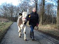 Geführte Kuh-Trekking-Wanderung
