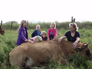 Die Kuh als liebevolles Lebewesen